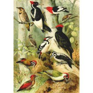 encyclopédia oiseaux