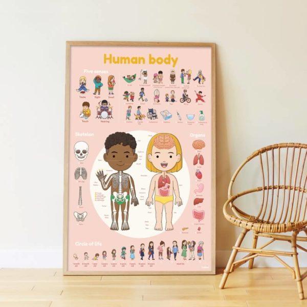 poppik-poster-sticker-affiche-corps-humain-jeu-educatif-19-600x601